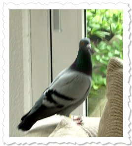 Besuch von oben:) Heute hatten wir auf einmal eine Taube zu Gast. Sie mochte auch unseren Apfelkuchen...