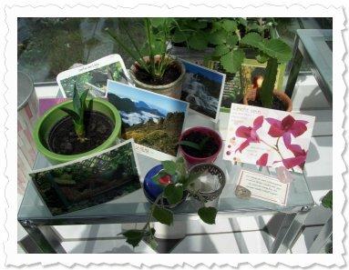 Ein Gabentisch mit einigen Ablegern, Karten, Wünschen und Präsenten von Euch... 1000 Dank dafür :-)