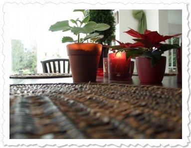 Shakti & Sophia wünschen allen Paten einen schönen 1. Advent in besinnlicher Stimmung.