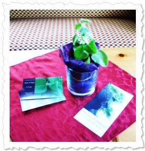 August 2013 - Ethelle darf nun im Glückshotel Waidring wachsen und gedeihen :-)