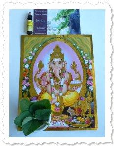 Sumitra wurde am 2. Juni '09 in Basel nach abenteuerlicher Reise in die Schweiz gleich mit Bachblüten behandelt.