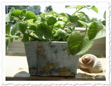 Tokaja geniesst den Sonnenschein in Bottrop auf der Fensterbank :)