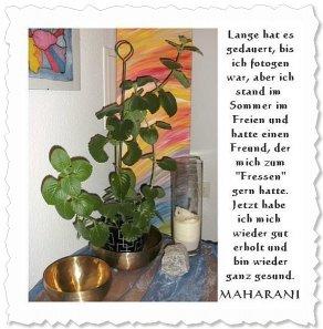 Maharani am 14. Dezember '09, sie freut sich auf ihr erstes Weihnachtsfest in Donaueschingen