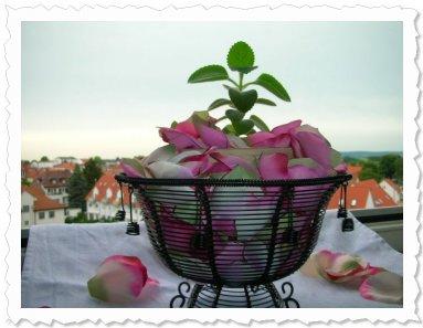 Meine Karry - im Mai 09 in Reinheim.  Auf Rosenblüten gebettet.