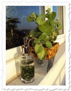 Die Blätter von Karry aromatisieren jetzt mein Massage-Öl