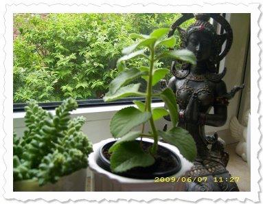 Baruka am 7. Juni '09 in Aachen, ist schon ganz schön gewachsen!