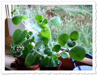 Dharma am 4. Juli '09 nach einer gut überstandenen Gewitter-Dusche ;-) wieder am sicheren Fenster.