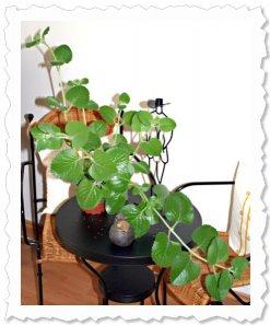 """Dharma am 26. Juli '09 vor dem Umzug - in Pose ;-) - jetzt """"wohnt"""" sie in meinem Büro."""