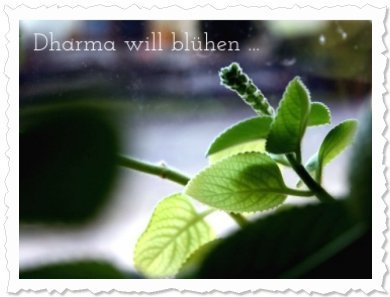 Dharma in am 23. März 2011 ...