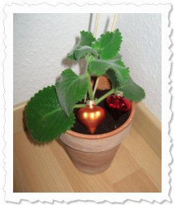 Elly in Böblingen - my flower of change - my flower of love
