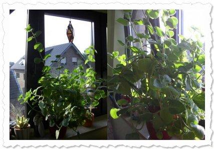 Explosion auf der Fensterbank! Langsam macht sie mir Angst! ;-)