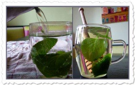 Tee aus frischen Blättern der FoC schmeckt sehr angenehm, ganz sanft und weich. Danke, Annette Maria, für den Tipp!