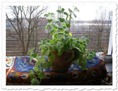 Momo am 24. März '10 in Hamburg. Sie schnuppert Frühlingsluft und wächst und wächst..... und duftet wunderbar