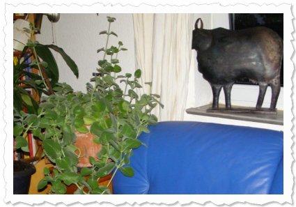 Momo am 3.August 2010. Sie wuchert und wächst und wächst... bald müssen wir anbauen :-)