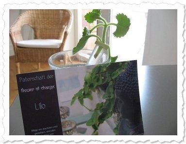 Lilo...ein bisschen Zitrone, ein bisschen Weihrauch, ein bisschen orientalische Gewürze - sehr interessant....