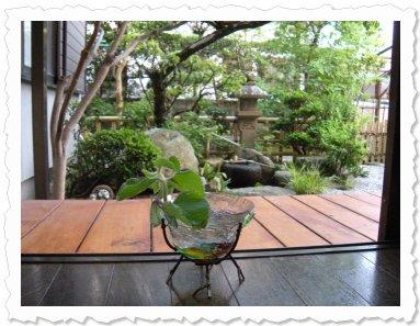 Yamamotosan von Liselotte, hat in Fukuoka ein neues Zuhause gefunden - mit einem sehr inspirierenden Ausblick auf den japanischen Garten.
