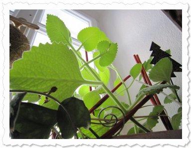 Eishima am 1. Februar auf einem Fenstersims in unserem schönen Bauernhaus in Hackenbuch.