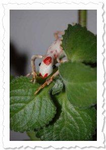 """Flower of Change Fotoaktion """"Advent"""": Rentier Rex."""