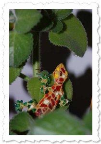 "Flower of Change Fotoaktion ""Advent"": Rentier Gekkolino"