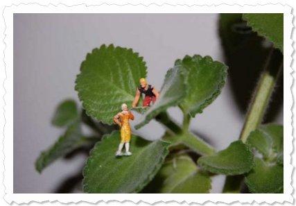 """Flower of Change Fotoaktion """"Advent"""": Kannst du Ihn schon sehen, auf seinem Schlitten?"""