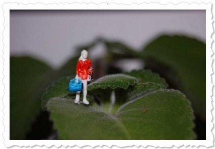 """Flower of Change Fotoaktion """"Advent"""": Hat er mich schon wieder versetzt, der Weihnachtsmann."""