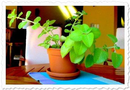Akanaj am 8. Juni '10 in Luque Sie hat den Sommer zum Wachsen genutzt und sich weiter vermehrt. Nun kommt die Ruhezeit.