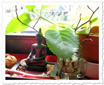 Ismihan am 5. April '10, kleine Zweige von der Felsenbirne im Glas.