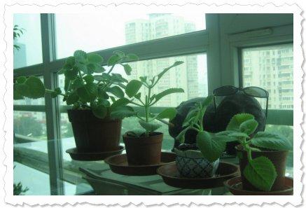 Arnolde in Beijing - Let your Love grow :)