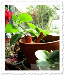 Ariane von Ismihan Ihr seht mich noch im Glas unten rechts, neben meiner Mutterpflanze. Nun bin ich umgezogen!