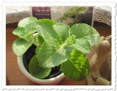 Inanna von Tara am 11. Mai '10 in Wien - sechs Wochen nach dem Einpflanzen - Inanna entwickelt sich prächtig!