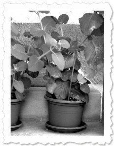 Bellissima - Shimei in Pisgone (BS)