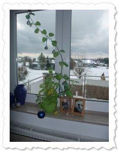 ...geschmückt mit Christbaumkugeln! Und in den Himmel gewachsen! 14.12.2010