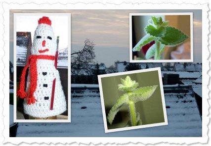 Reikja von Antonia will im Winter blühen! ü