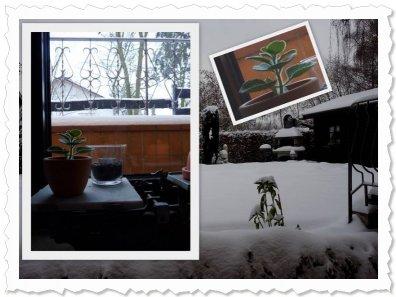 Uma am 24.12.2010 im neuen zu Hause bei Helga :-)