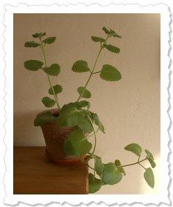 Ara fängt die ersten Sonnenstrahlen 2011 ein