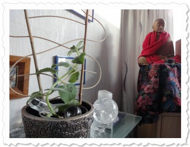 Nadire am 28. Juni '11 in Wettswil a/A gepflanzt, nachdem sie sehr gut und innert einer Woche Wurzeln schlug.