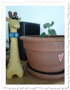 Jolanta-Maria am 21. Juni '11 in Rottenmann ist umgezogen und nun kann sie wachsen und gedeihen