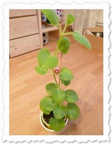 Weda wächst