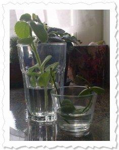 02.02.2013 - angekommen und grade ins Wasserglas gewandert!