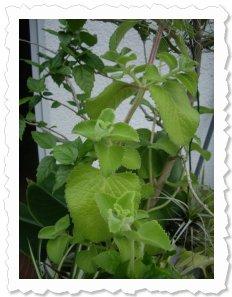 Birgit von Serina am 2. Mai '14 in Merzdorf Sie kuschelt gern mit anderen Pflanzen