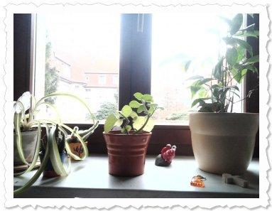 Edira's neue zuhause mit ihren nachbarn