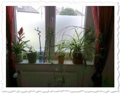 Olina am 28. Juli '14 in Wuppertal Olina in ihrer Pflanzen-WG. ;-)